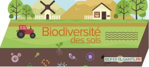 Biodiversité des sols