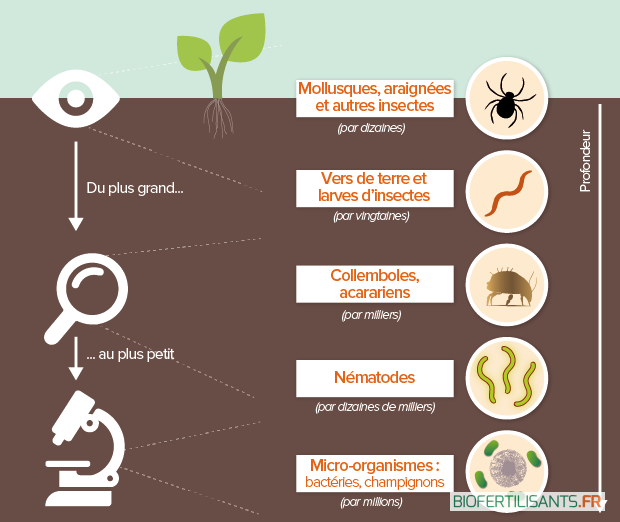 Biodiversite Des Sols Tout Savoir Sur Son Interet Pour L