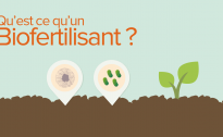 Un biofertilisant, qu'est-ce que c'est et à quoi ça sert ?