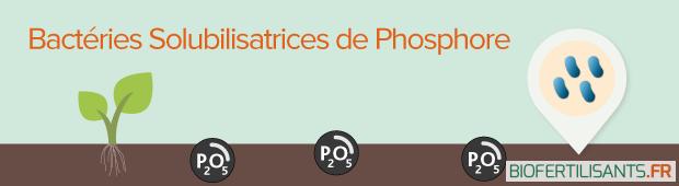 VisuelArticlesnteretsAgronomiquesBacteriesPhosphore