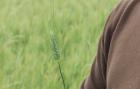Témoignage : Riccardo, agriculteur dans le Lauragais