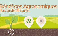 Quels bénéfices agronomiques apportent les biofertilisants ?
